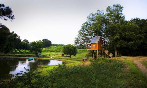 Photo Courtesy of Treehouse Vineyards