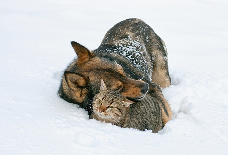 Dog-and-Cat-in-Snow